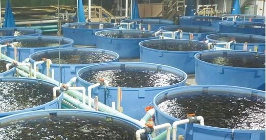 Бассейн для разведения рыбы или раков